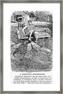 Roosevelt Cartoon, 1906 Framed Print by Granger