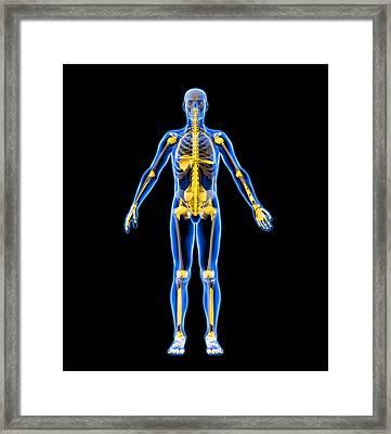 Skeleton And Ligaments, Artwork Framed Print by Roger Harris