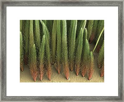 Tarantula Hair, Sem Framed Print by Steve Gschmeissner