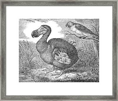 The Mauritius Dodo Framed Print by Granger