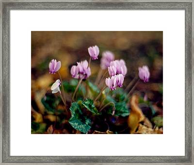 Untitled Framed Print by Marcio Faustino