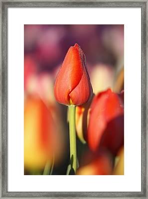 Woodburn, Oregon, United States Of Framed Print by Craig Tuttle