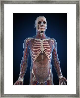 Male Anatomy, Artwork Framed Print by Sciepro