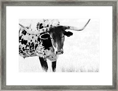 3255 Framed Print by Elizabeth Hart