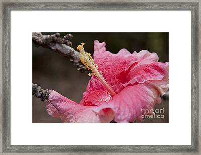 Art By Nature Framed Print by Sharon Mau