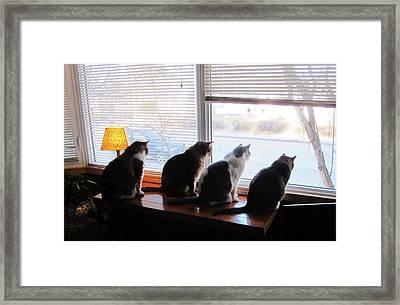 4 Cats Spot Bird Through Window Framed Print by Andy Hodgson