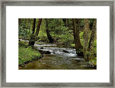 Craig Run Monongahela National Forest Framed Print by Thomas R Fletcher
