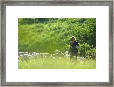 Shepherd Framed Print by Odon Czintos