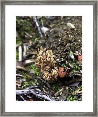 Alaska Mushroom Framed Print by Grover Woessner