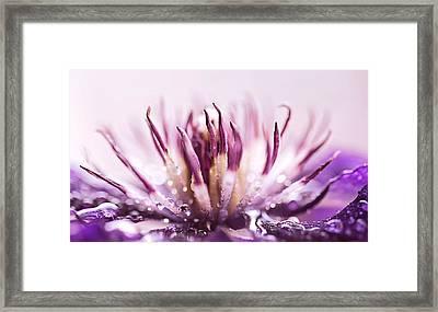 Clematis Framed Print by Debbie Dee