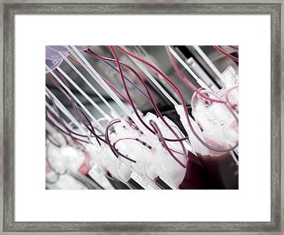 Donor Blood Processing Framed Print by Tek Image