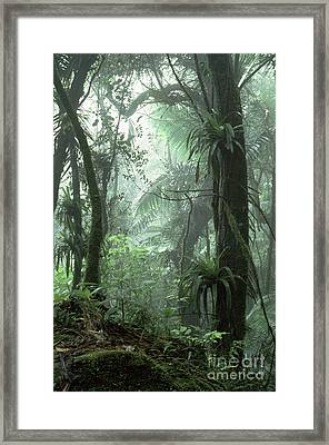 El Yunque National Forest Framed Print by Thomas R Fletcher