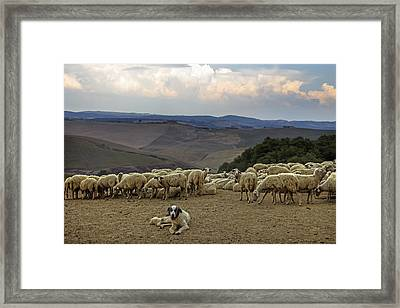 Flock Of Sheep Framed Print by Joana Kruse