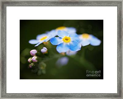 Flower Framed Print by James Taylor