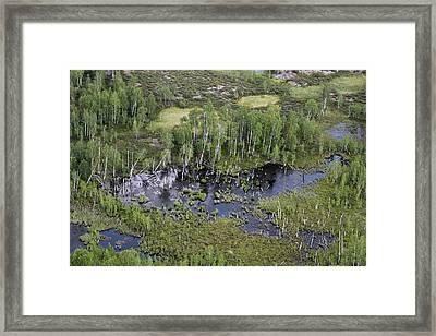 Tunguska Forest Framed Print by Ria Novosti