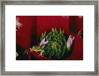 Untitled Framed Print by Paul Zahl