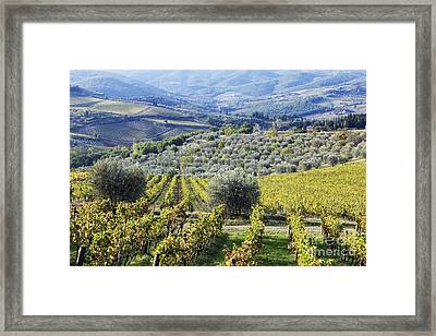 Vineyards And Olive Groves Framed Print by Jeremy Woodhouse