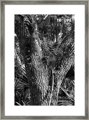 Centurions Of The Forest Series Framed Print by Terry Troupe