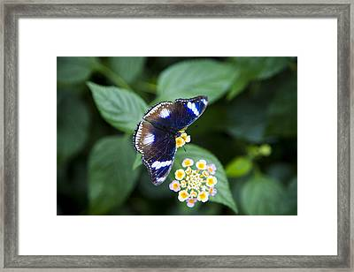 A Butterfly Rests On A Leaf Framed Print by Taylor S. Kennedy