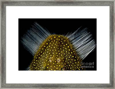 Amazon River Catfish Framed Print by Dante Fenolio