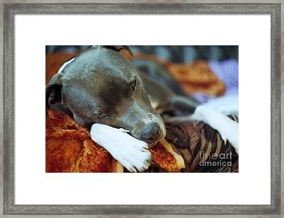 Lazy Afternoon Framed Print by Angel  Tarantella