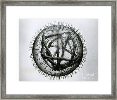 Measles Virus Framed Print by Omikron