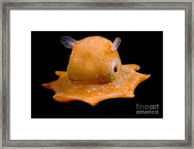 Flapjack Octopus Framed Print by Dante Fenolio