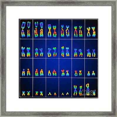 Male Karyotype Framed Print by Omikron