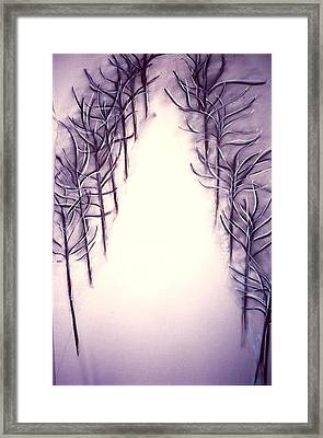 71st Street In The Snow Framed Print by Carrie Maurer