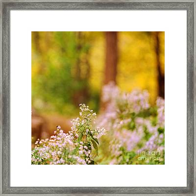 Autumn Series Framed Print by HD Connelly