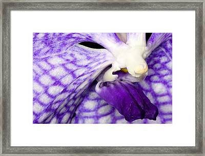 Exotic Orchid Flowers Of C Ribet Framed Print by C Ribet