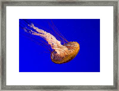 Untitled Framed Print by Unknown