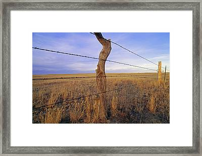 A Barbed Wire Fence Stretches Framed Print by Gordon Wiltsie