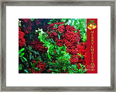 A Berry Merry Christmas Framed Print by Kaye Menner