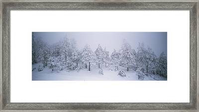 A Blizzard On Spruce Mountain Framed Print by Rich Reid