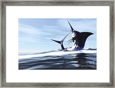 A Blue Marlin Jumps Through The Ocean Framed Print by Corey Ford