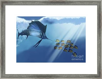 A Blue Marlin Swims After A School Framed Print by Corey Ford
