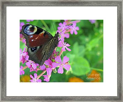 A Butterfly On The Pink Flower 2 Framed Print by Ausra Huntington nee Paulauskaite