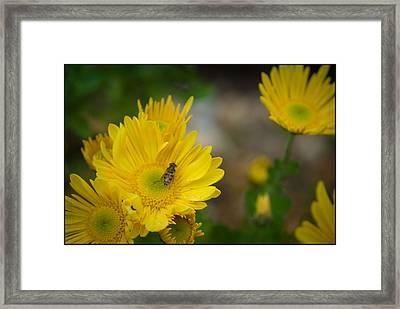 A Buzzing Spot Framed Print by Kelly Rader