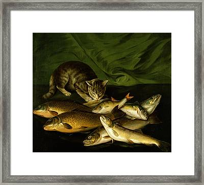 A Cat With Trout Perch And Carp On A Ledge Framed Print by Stephen Elmer