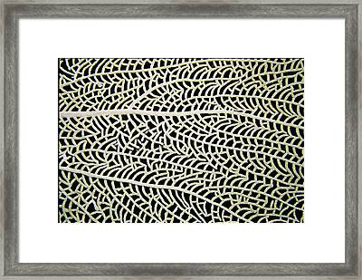A Close View Of A Sea Fan Framed Print by Heather Perry