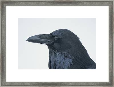 A Close View Of The Head Of A Raven Framed Print by Tom Murphy