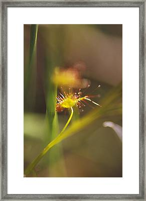A Delicate Yellow-gold And Lime Green Framed Print by Jason Edwards