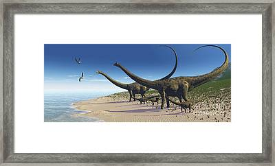 A Diplodocus Herd Comes Down To A Lake Framed Print by Corey Ford