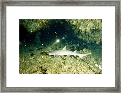 A Diver Exploring A Cavern Encounters Framed Print by Tim Laman