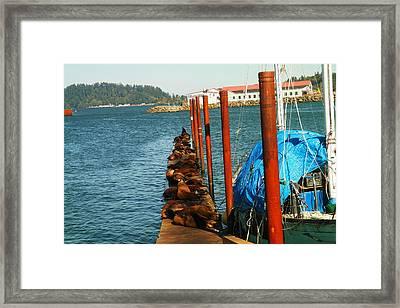 A Dock Of Sea Lions Framed Print by Jeff Swan
