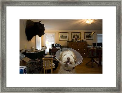 A Dog With A Plastic Collar Framed Print by Joel Sartore