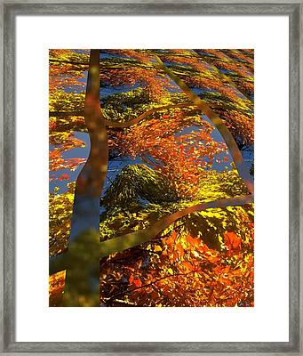 A Fall Perspective Of Color Framed Print by Rene Crystal