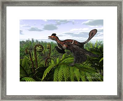 A Feathered Microraptor Perched Atop Framed Print by Walter Myers