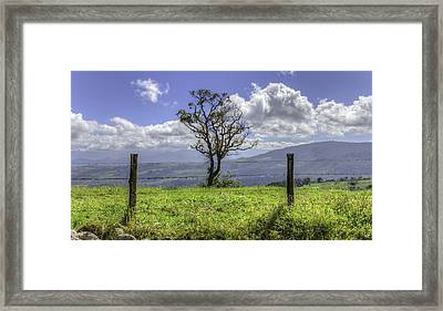 A Fence And A Tree 3552hdr Framed Print by Sortarivs Arts